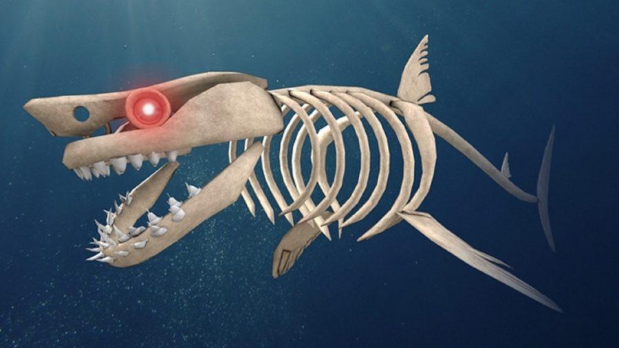 A living shark skeleton